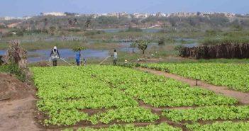 Senegal-Agriculteurs