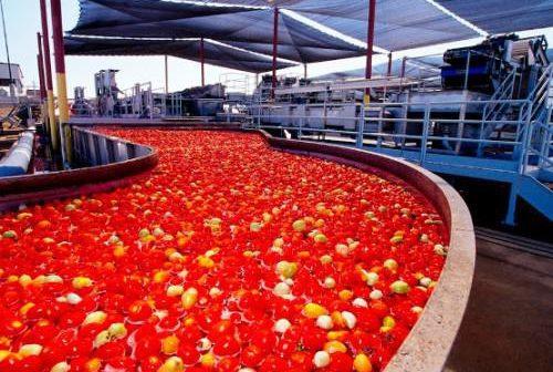 La plus grande Usine de tomate d'Afrique du Groupe Dangote à Kano