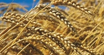 matières premieres agricoles