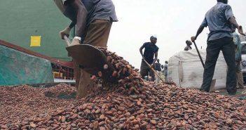 Cacao ivoirien