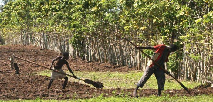 Dégradation des terres