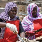 Femmes mauritaniennes évoluant dans le secteur de la pêche
