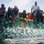 Pêche dans les côtes mauritaniennes