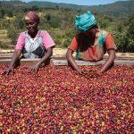 Café au Burundi