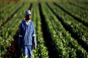 L'agriculture du Togo se modernise à marche forcée