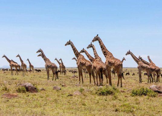 Impact du Covid-19 : Le Kenya promeut son tourisme local