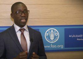 Agriculture : Le Togo veut sa carte de fertilité des sols