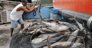 La pêche au thon dans les eaux sénégalaises2