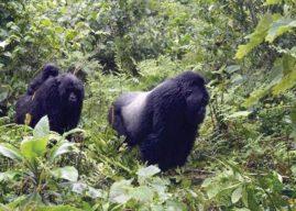 Le tourisme rwandais tient débout malgré le Covid-19