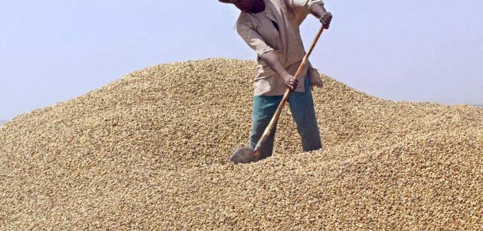 arachide, sénégal, acheteur chinois