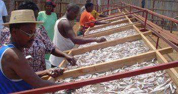 Séchage du poisson au bord du lac Tanganyika