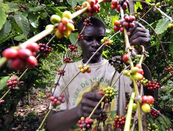cafe cote ivoire