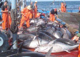 Mauritanie – Union européenne  Prorogation de l'accord de pêche, en attendant l'aboutissement des négociations finales