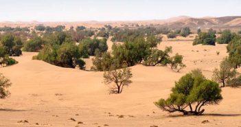 Sahel, Grande Muraille Verte