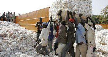Production du coton au Mali