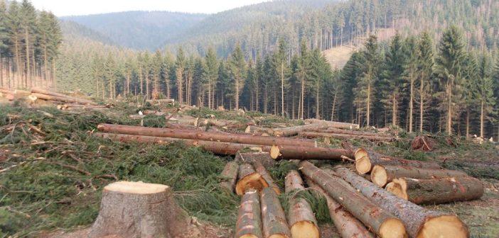 Cameroun: L'UE inquiète de la déforestation accélérée