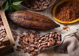 Fève de cacao : La Côte d'Ivoire baisse de près de 20% le prix d'achat